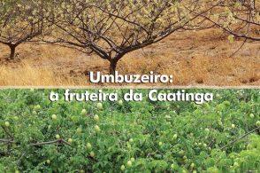 """Lançamento da Revista """"Informe Agropecuário"""""""